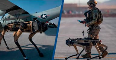 US Military Deploys Robot Dogs To Guard Air Force Base