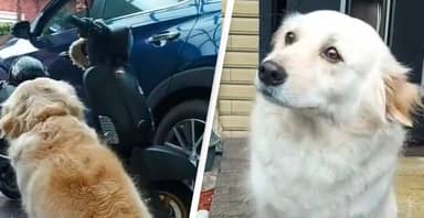 Dog Doesn't Want Owner To Go To Work, Gives Him 'Sad Eyes' For 10 Mins