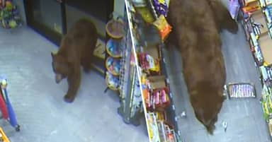Hungry Bears Keep Wandering Into The Same California Gas Station For Late Night Snacks