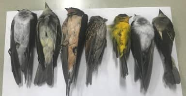 Hundreds Of Thousands Of Migratory Birds Found Dead In New Mexico