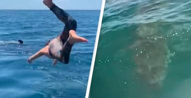 Guy Dives In Water To Swim With 'Harmless Shark', It Was Not Harmless