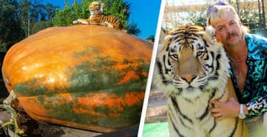 Man Wins 'Super Bowl Of Pumpkins' With 2,350-Pound Beast Called The Tiger King