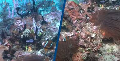 Coral Reef Bigger Than Empire State Building Discovered In Queensland
