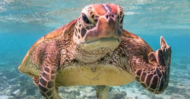 Photo Of Grumpy Sea Turtle Giving Finger Wins Top Prize At Comedy Wildlife Photography Awards