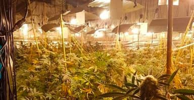 Huge £1 Million Cannabis Crop Discovered In Former Coventry Nightclub