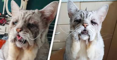 Sad-Looking Cat With Rare Skin Disease Finds Forever Home
