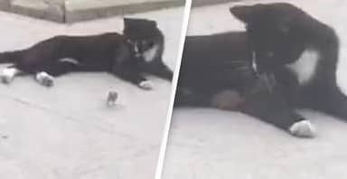 Mouse Runs Up To Cat 'For Cuddles' After Being Chased