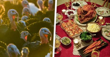 Turkey Shortage Could Ruin Christmas Dinner