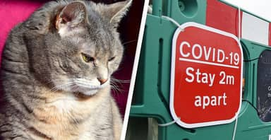 Cats Must Self-Isolate To Stop Spread Of Coronavirus, Scientists Warn