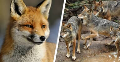 Nearly 1.2 Million Wild Animals Were Killed In US Last Year Using Taxpayers' Money