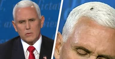 Fly Landing On Mike Pence's Head During Debate Captivates America