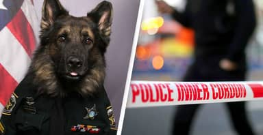 Police Dog Wears Full Uniform For His Official K-9 Badge Photo