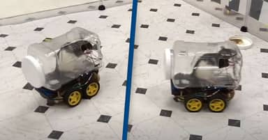 Rats Are Being Taught To Drive Tiny Cars To Lower Their Stress Levels