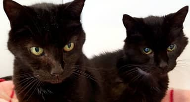 UK's Oldest Cat Brothers, Aged 21, Are Rehomed Together