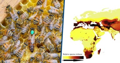 Scientists Have Mapped Out The Entire Global Bee Population