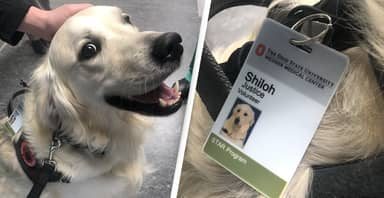 Hospital Hires A Dog To Cheer Up Other Employees