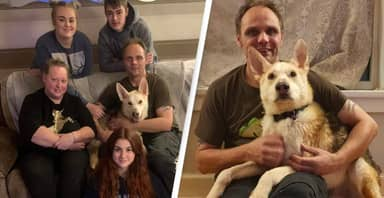Dog Found 300 Miles Away Reunited With Family After Eight Years