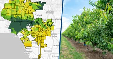 Google Launches Tree-Mapping Tool To Help Cities Cool Down