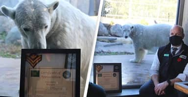 Toronto Zoo Polar Bear Promoted To 'Honorary Master Corporal' By Canadian Army