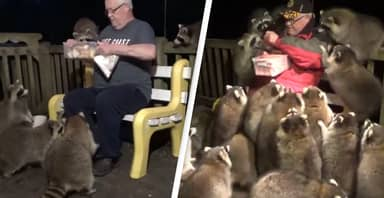 Man Feeds 20 Hungry Racoons Gathered On His Back Porch