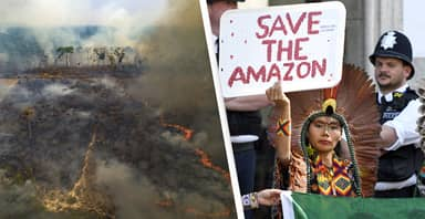 Amazon Rainforest Will Be Wiped Out By 2064, Scientist Warns