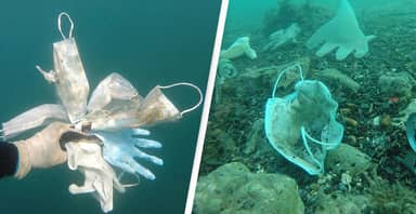 More Than 1.5 Billion Face Masks Thought To Have Entered Ocean This Year
