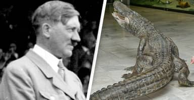 Alligator Rumoured To Be Hitler's Personal Pet To Be Put On Display In Russia