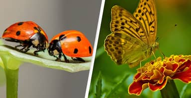 'Frightening' Global Decline In Insect Populations Is 'Tearing Apart Tapestry Of Life'