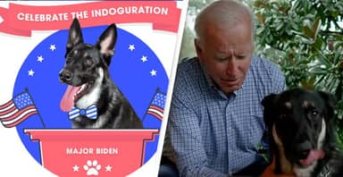 Shelter Where Biden Adopted His Dog Will Have 'Indoguration' For Major