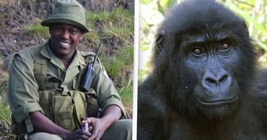 Gunmen Kill Rangers At National Park That's Home To Critically Endangered Mountain Gorillas