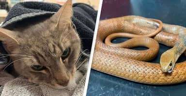 Hero Cat Dies After Saving Two Young Children From Deadly Snake