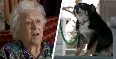 Dog Becomes Millionaire After Owner Leaves Everything To Her In Will