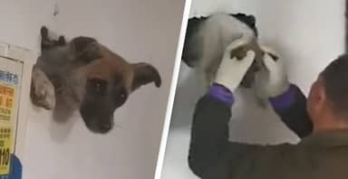 Dog Gets Trapped In Wall While Trying To Hide From Firework Explosions