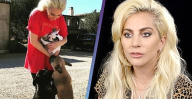 Lady Gaga Offers $500,000 Reward For Safe Return Of Dogs After Dogwalker Shot