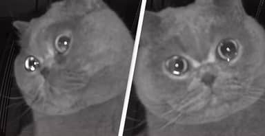 Adorable Pet Cat 'Cries' Into Security Camera When Owners Leave