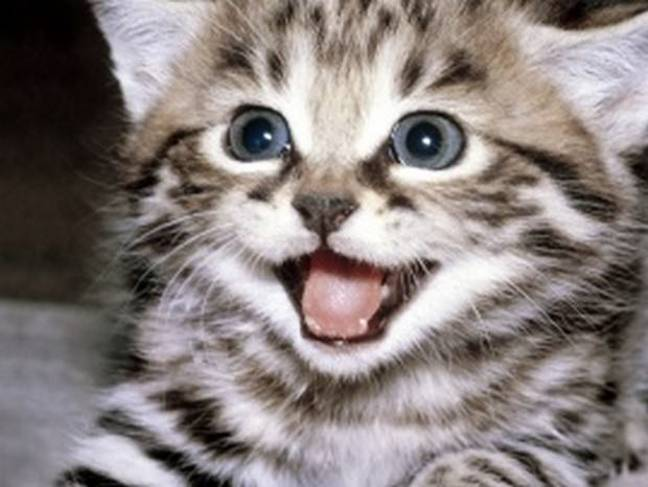smiling_cats_1
