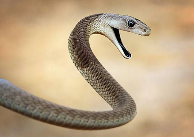 snake featured