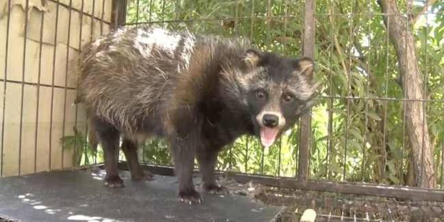 Man buys raccoon thinking it was a dog