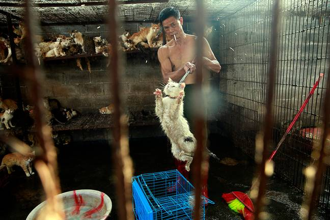 Cats in a slaughterhouse