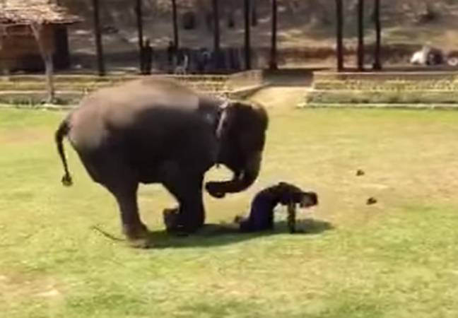 Elephant and keeper