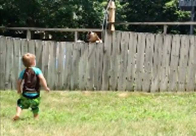 Toddler playing fetch with dog over fence