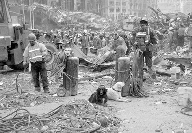 Search and rescue dogs 9/11