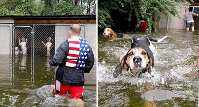 dogs in cage Hurricane Florence