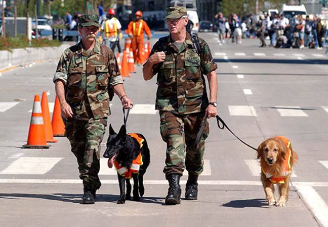 Dogs searching 9/11