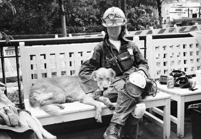 Rescue dogs at 9/11