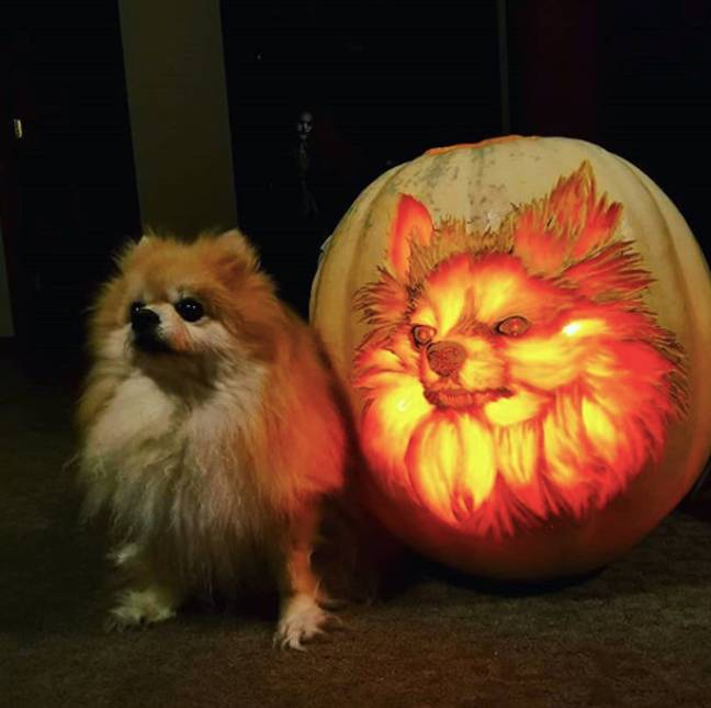 Andy Manoloff pumpkin sophie dog