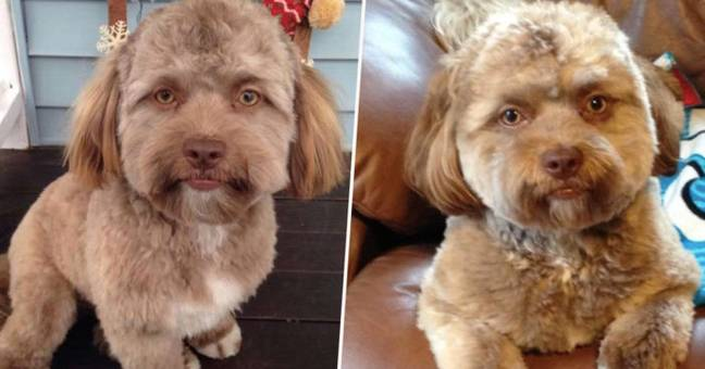 Dog with human face