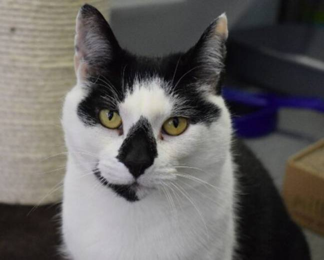 Twizzle the cat needs a home.