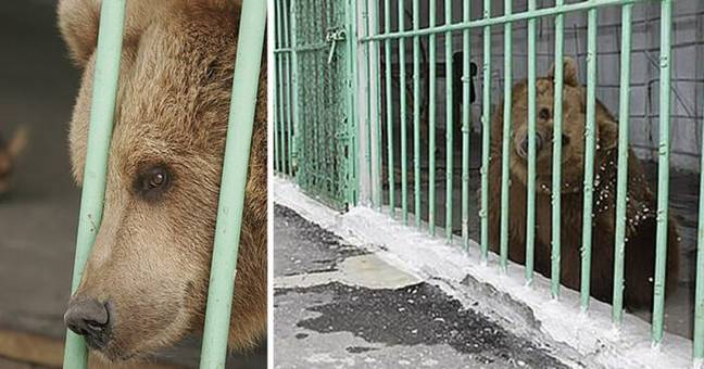 A Bear Is Serving A Life Sentence In Prison With Dangerous Criminals