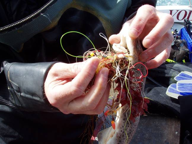 Untangling fish from fishing line